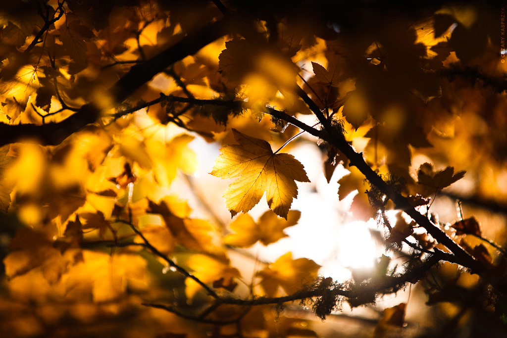 Cezary Kasprzyk Photography -  New Zealand - Arrowtown - Autumn Leaves - 2010