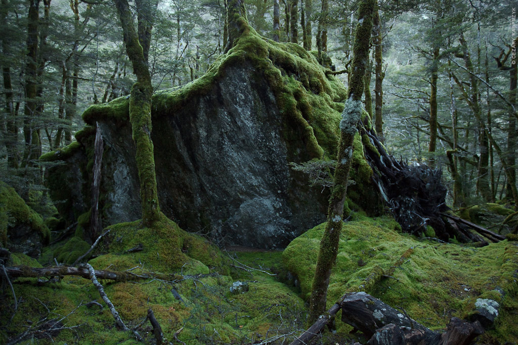 Cezary Kasprzyk Photography - New Zealand - Dart-Rees Track - Magic Door - 2010