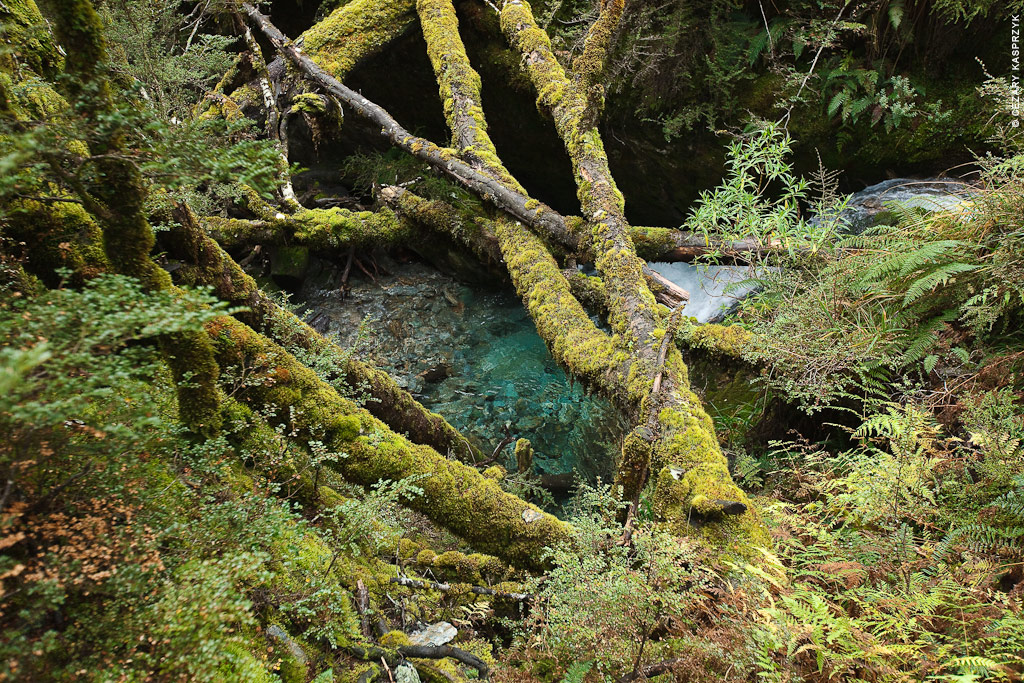 Cezary Kasprzyk Photography - New Zealand - Dart-Rees Track - Blue Water & Green Moss - 2010