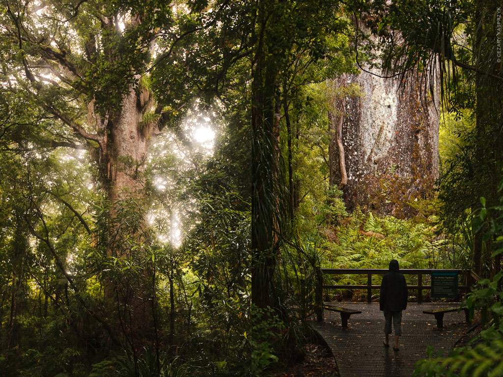 Cezary Kasprzyk Photography - New Zealand - Waipoua Kauri Forest - 2010
